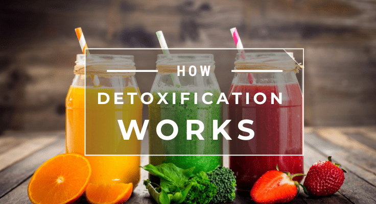 how detoxification works