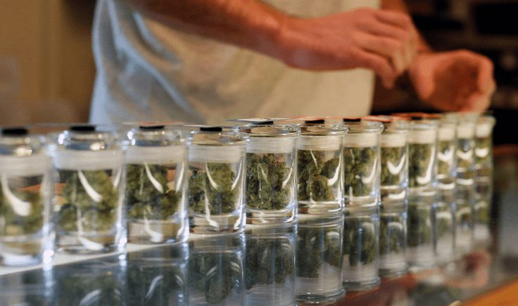 cannabis dispensary and the future