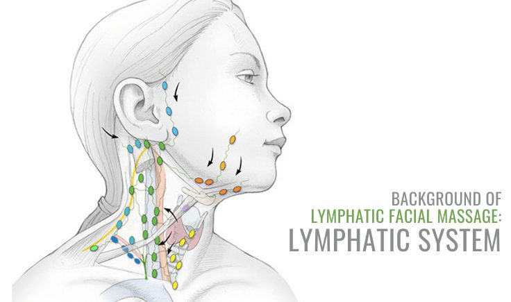 background of lymphatic facial massage lymphatic system